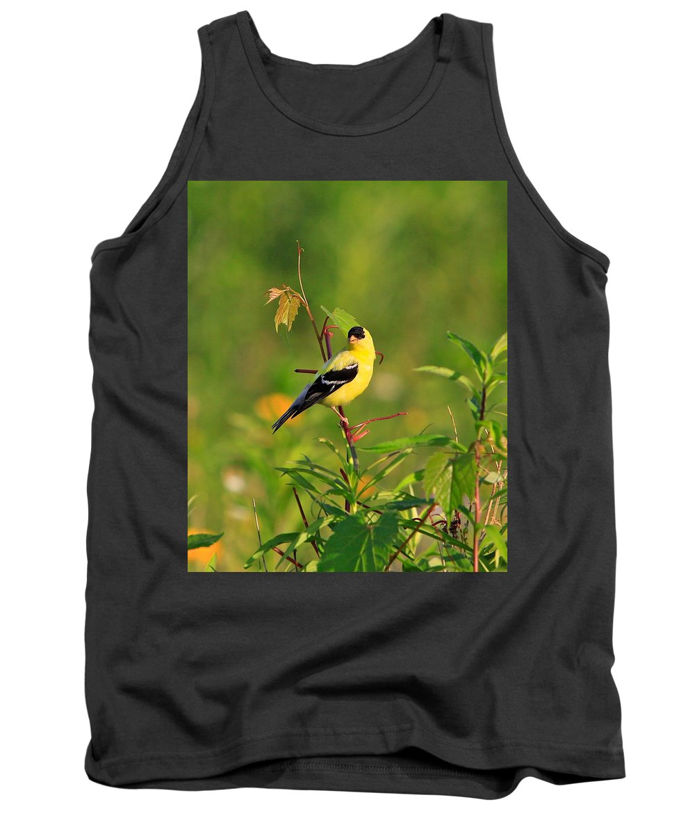 Gold Finch Tank Top featuring the photograph Gold Finches-2 by Robert Pearson