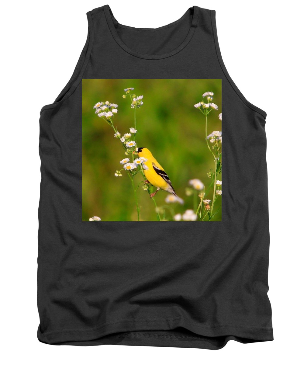 Gold Finch Tank Top featuring the photograph Gold Finches-3 by Robert Pearson