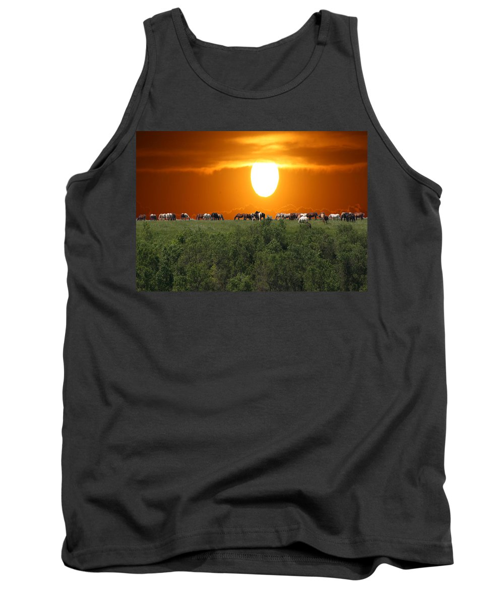 Horses Herd Sunset Grass Trees Nature Animals Scenery Sun Tank Top featuring the photograph Grazing by Andrea Lawrence