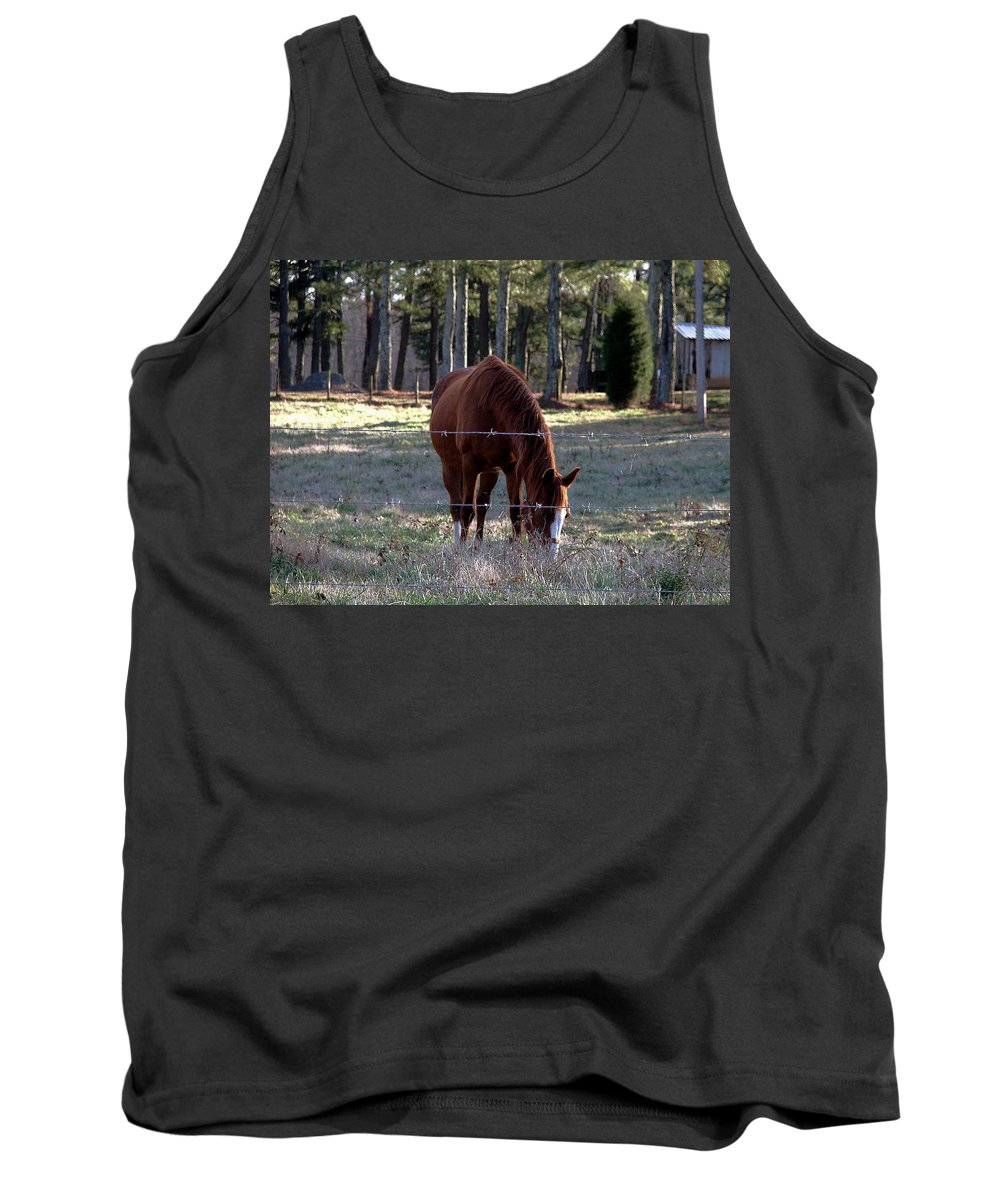 Horse Tank Top featuring the photograph Grazing by Robert Meanor