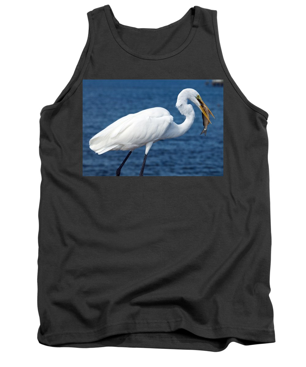 Great; Egret; Ardea; Alba; Eating; Eat; Fish; Redfish; Red; Bird; Seabird; Ocean; Indian; River; Lag Tank Top featuring the photograph Great Egret In Florida by Allan Hughes