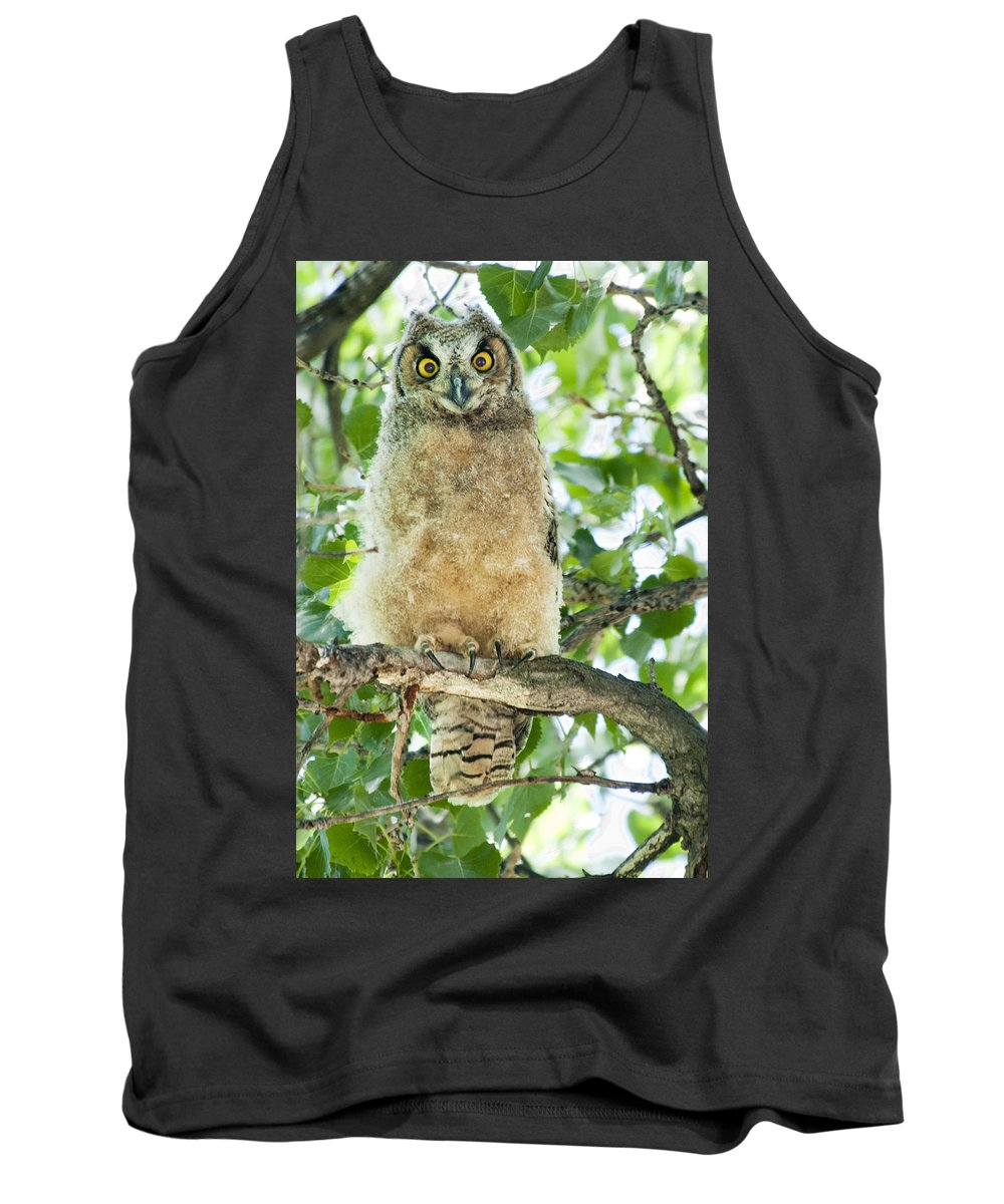 Owl Tank Top featuring the photograph Great Horned Owl by Gary Beeler