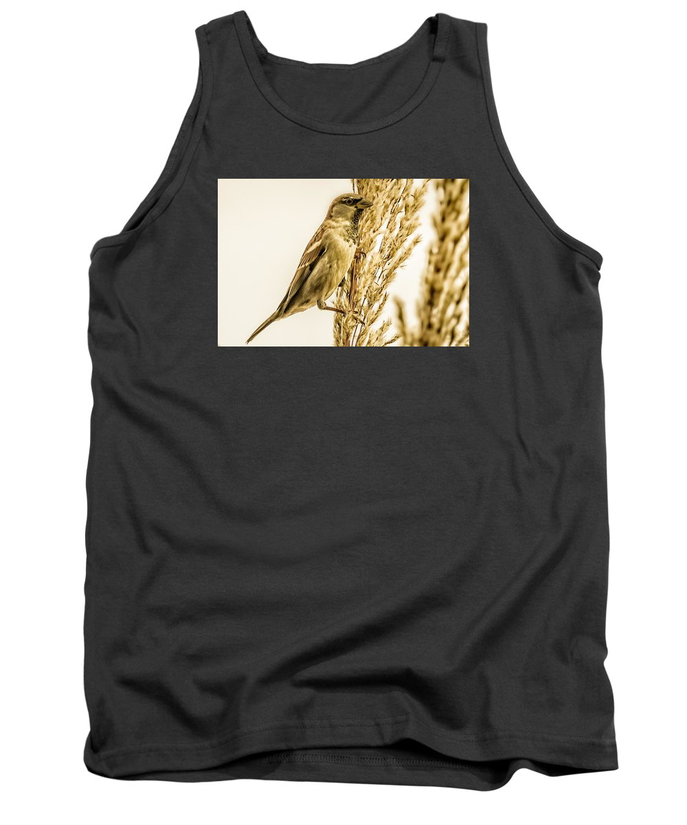 Bird Tank Top featuring the photograph Harvest Time Iv by Trent Garverick