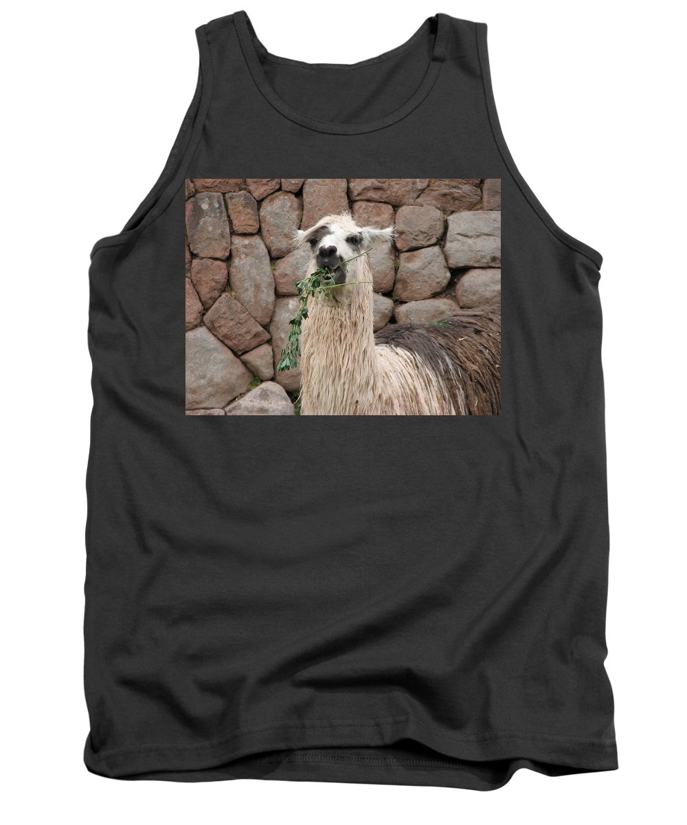 Animal Tank Top featuring the photograph Hello by Sandra Bourret