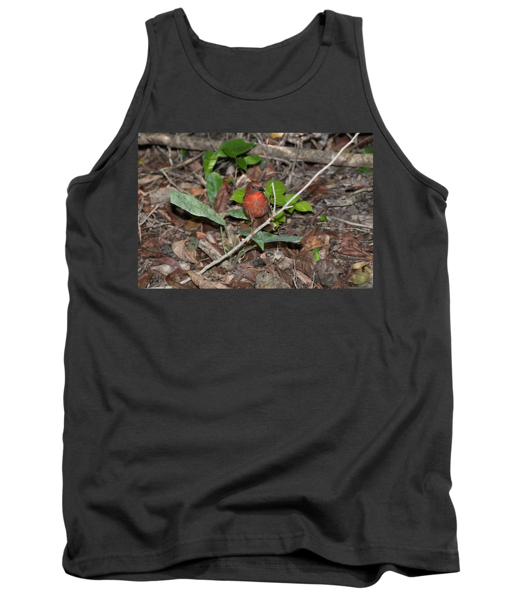 Mexico Quintana Roo Tank Top featuring the digital art Hepatic Tanager At The Coba Ruins by Carol Ailles
