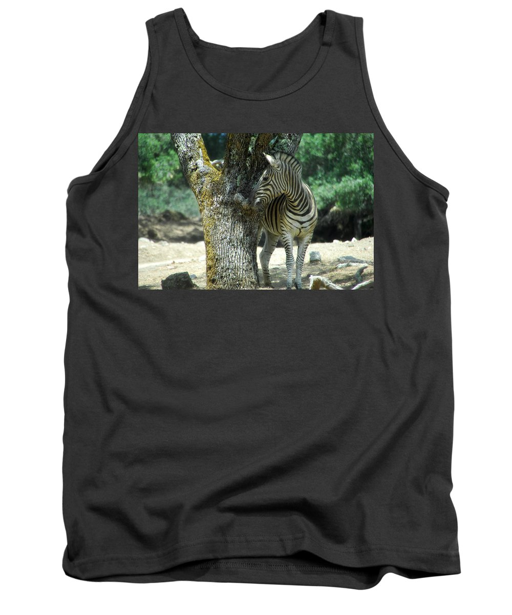 Zebra Tank Top featuring the photograph Hide And Seek by Donna Blackhall