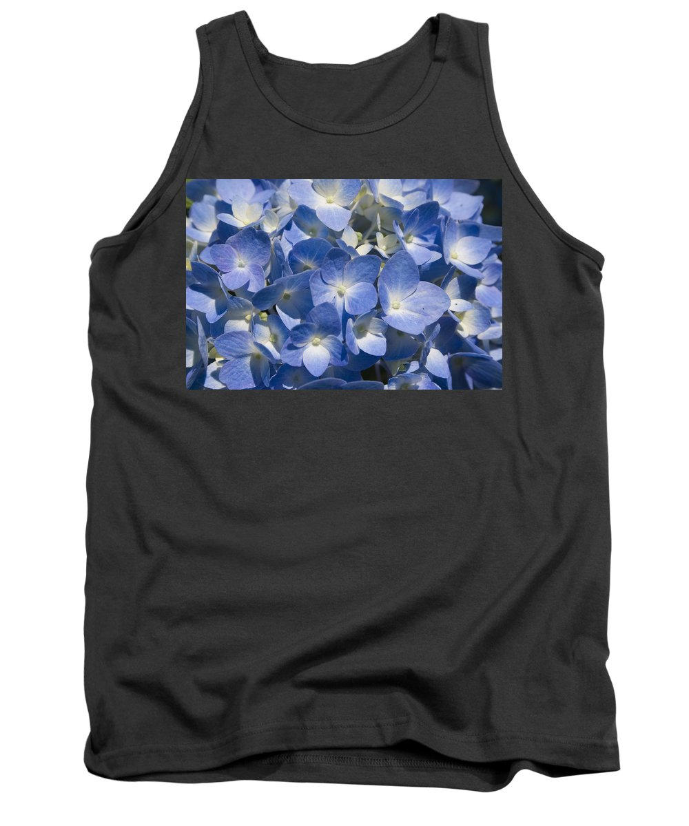 Flower Bloom Blue White Close Nature Sunny Summer Hydrangea Tank Top featuring the photograph Hydrangea by Andrei Shliakhau