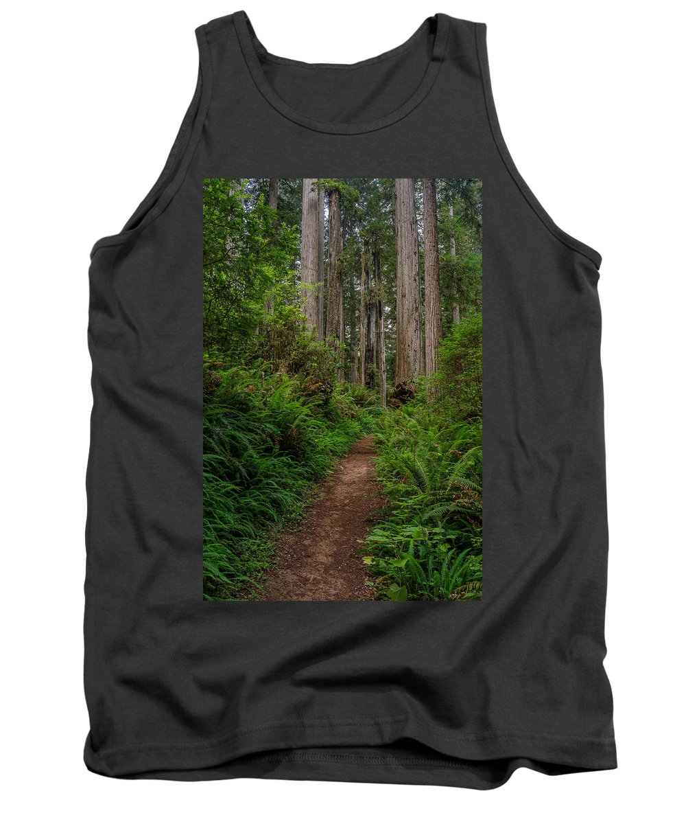 Redwoods Tank Top featuring the photograph Into The Redwoods by Greg Nyquist
