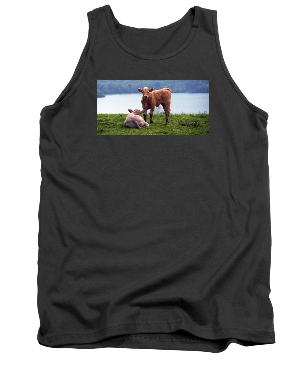 Ireland Tank Top featuring the photograph Irish Calves At Lough Eske by Teresa Mucha