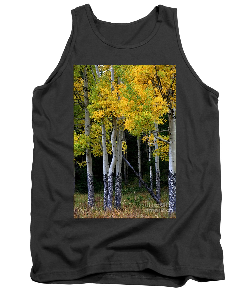 Aspens Tank Top featuring the photograph Leaning Aspen by Timothy Johnson
