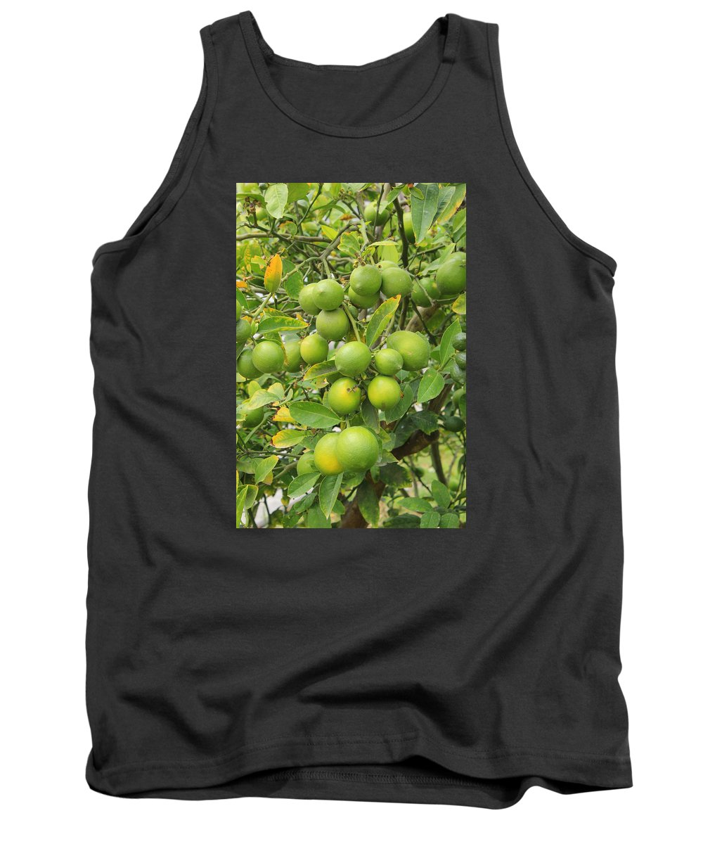 Lemon Tree Tank Top featuring the photograph Lemons Growing On A Tree by Robert Hamm