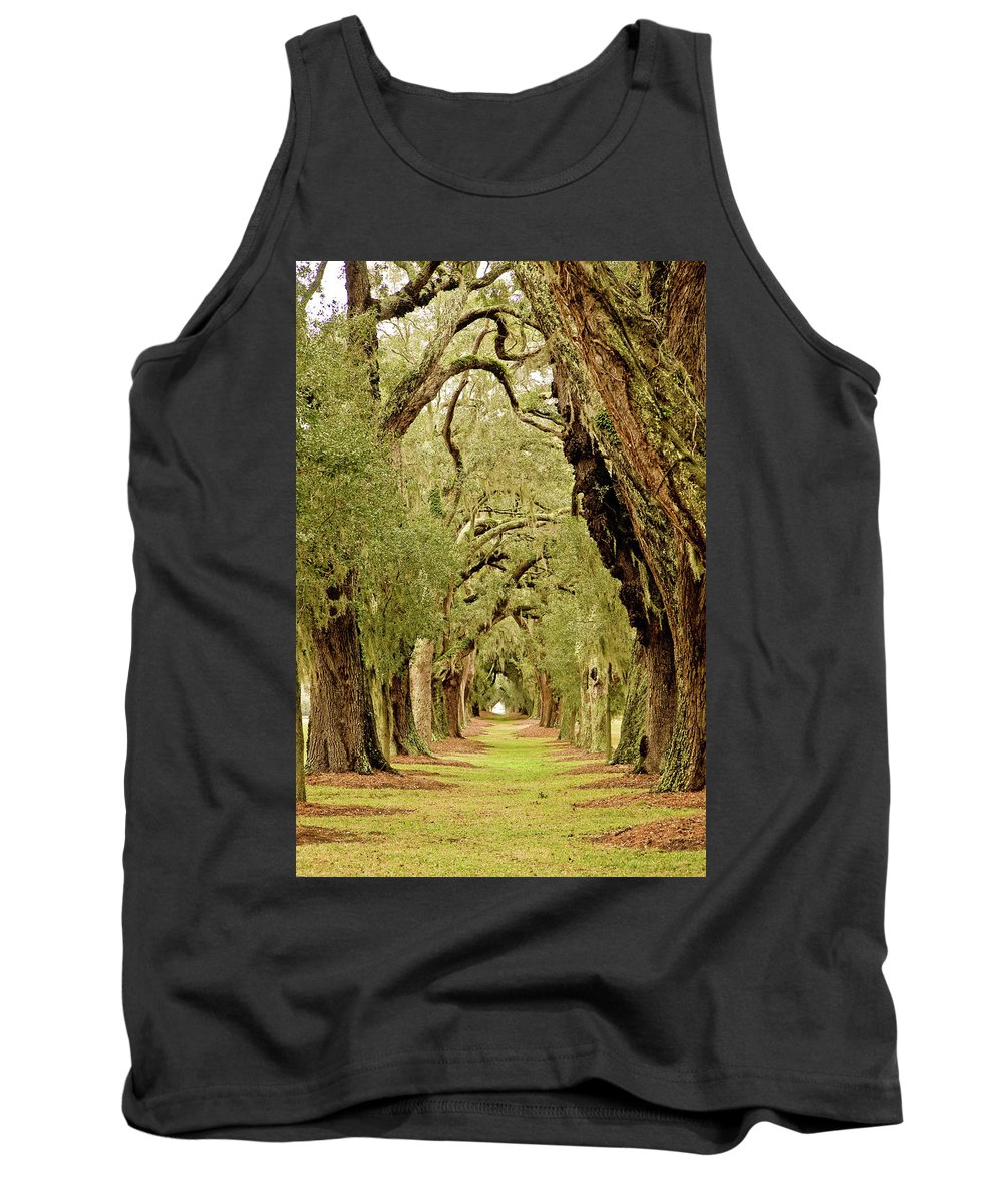Forest Tank Top featuring the photograph Line Of Oak Trees To Distance by Darryl Brooks