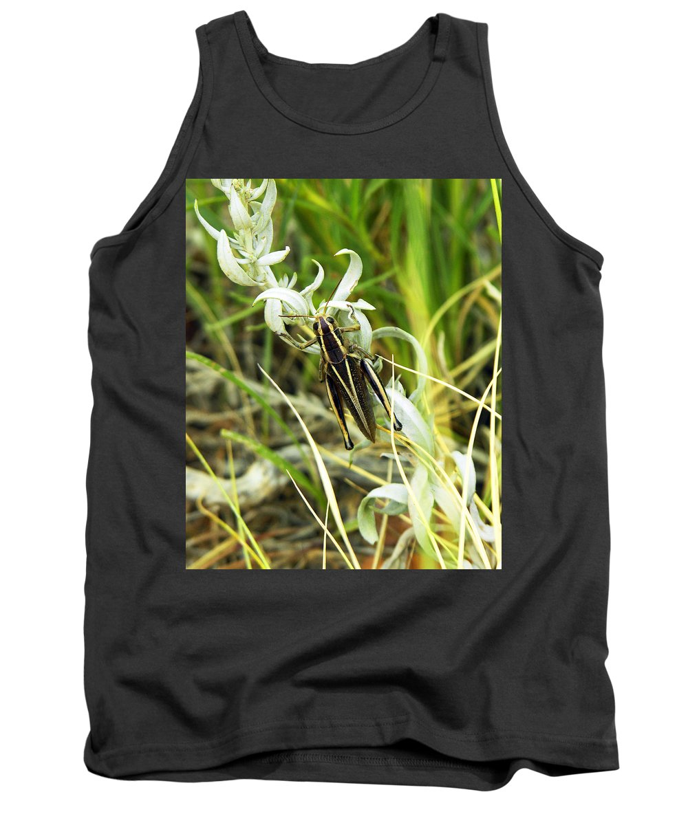 Grasshopper Tank Top featuring the photograph Little Grasshopper by Marilyn Hunt