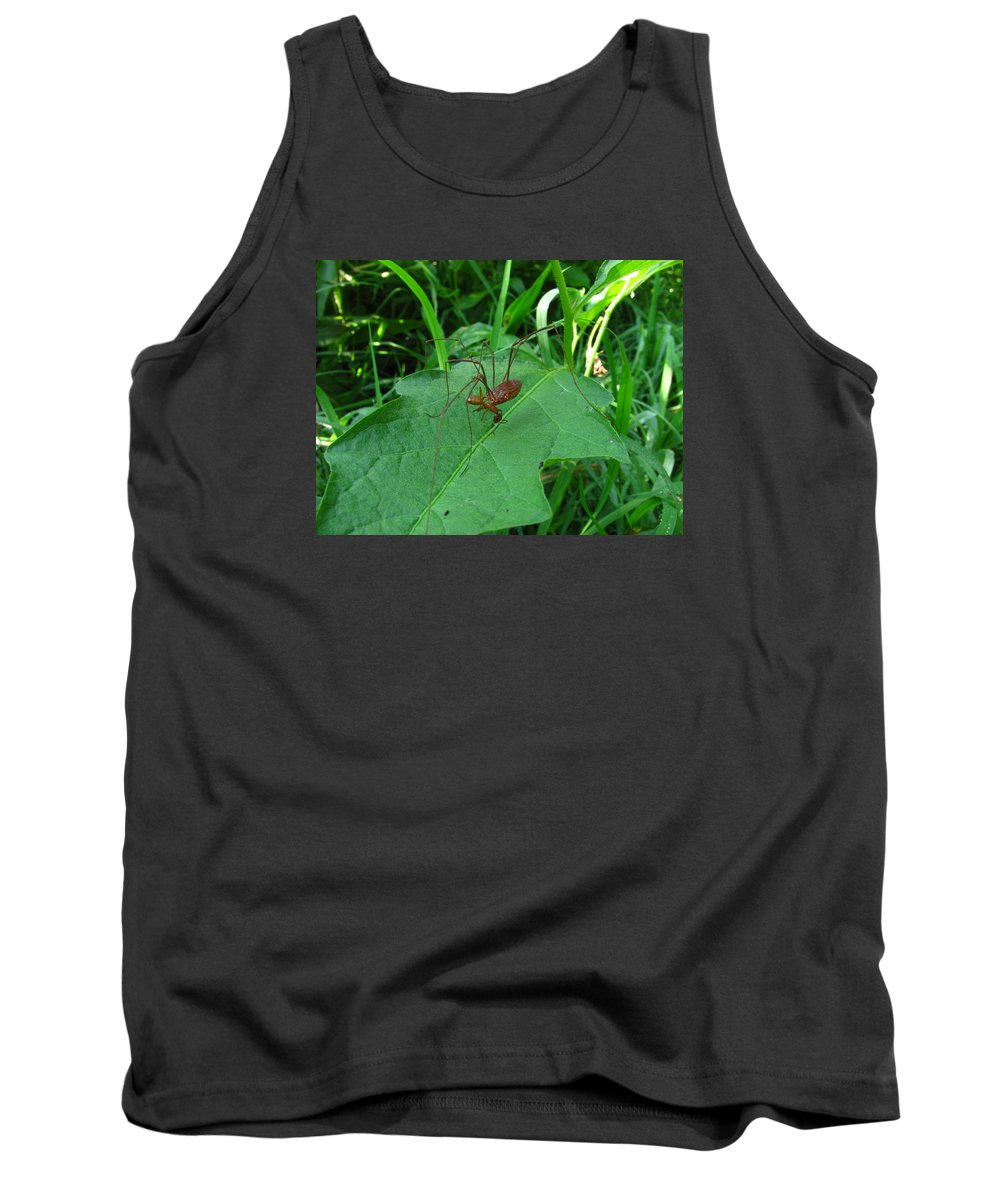 Long Legged Harvestman Images Long Legged Harvestman Prints Long Legged Harvestman Pics Long Legged Harvestman Photos Spider Images Daddy Long Legs Arachnid Entomology Biodiversity Nature Forest Food Chain Ecology Tank Top featuring the photograph Long Legged Harvestman by Joshua Bales