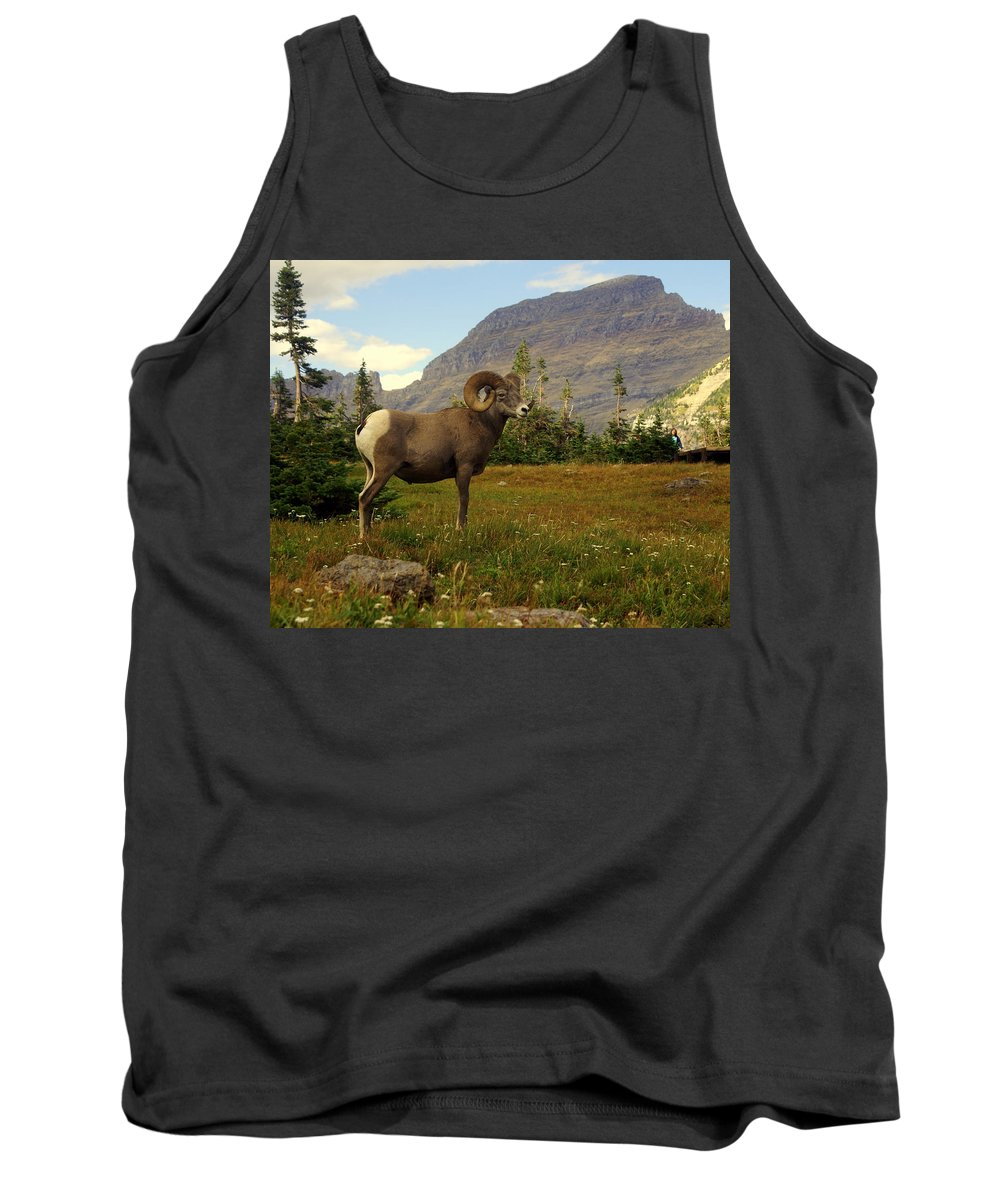 Big Horn Sheep Tank Top featuring the photograph Master Of His Domain by Marty Koch