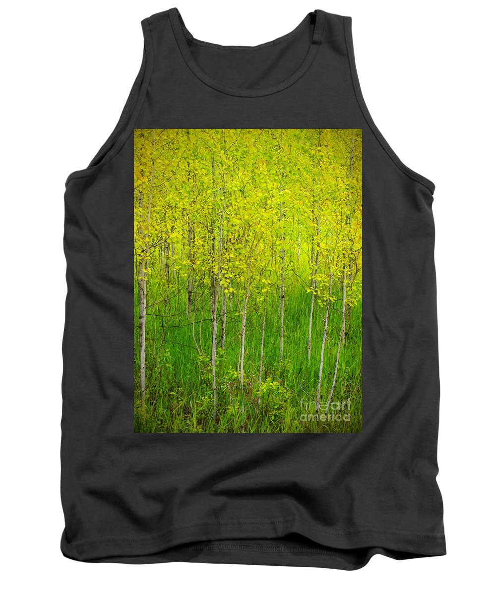 Trees Tank Top featuring the photograph May 25 2010 by Tara Turner