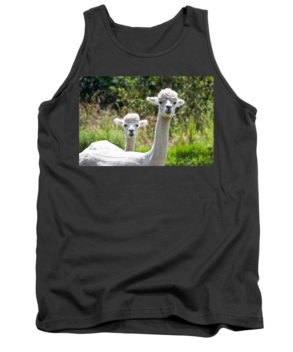 Alpaca Tank Top featuring the photograph Me And My Sidekick by Susie Peek
