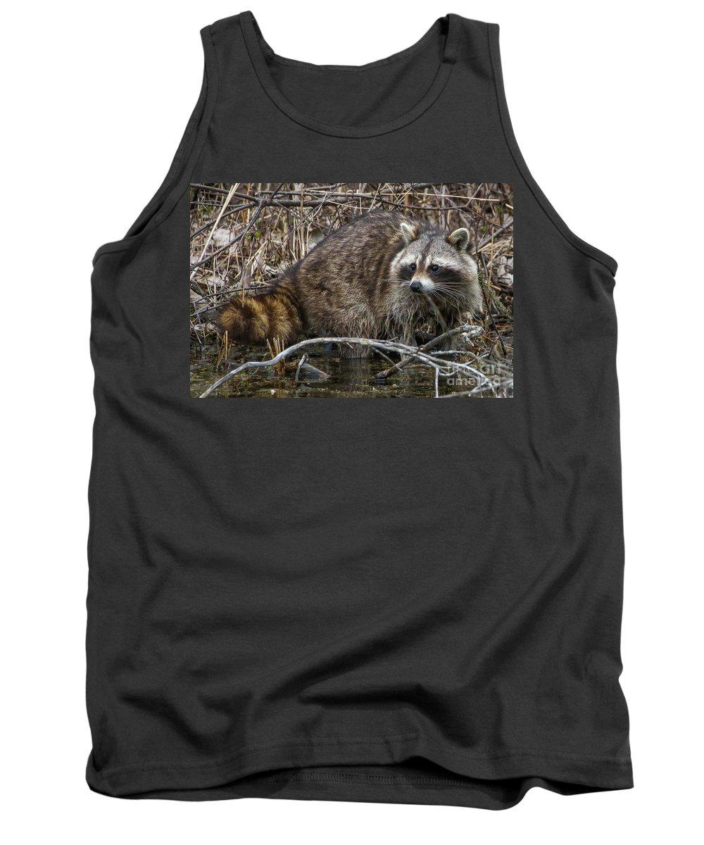 Raccoon Tank Top featuring the photograph Michigan Raccoon by Susan Grube