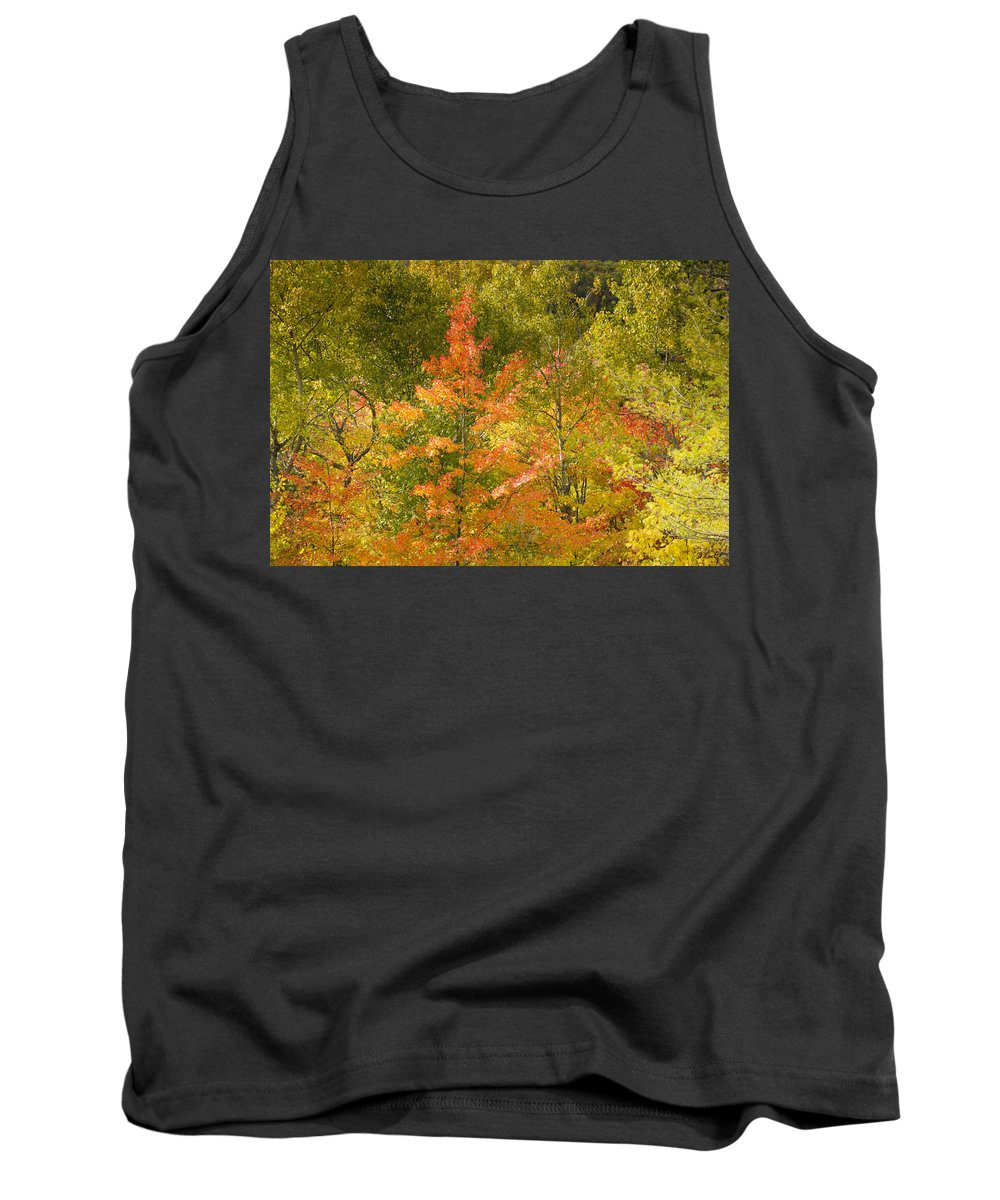 Tree Tank Top featuring the photograph Mixed Autumn by Phill Doherty