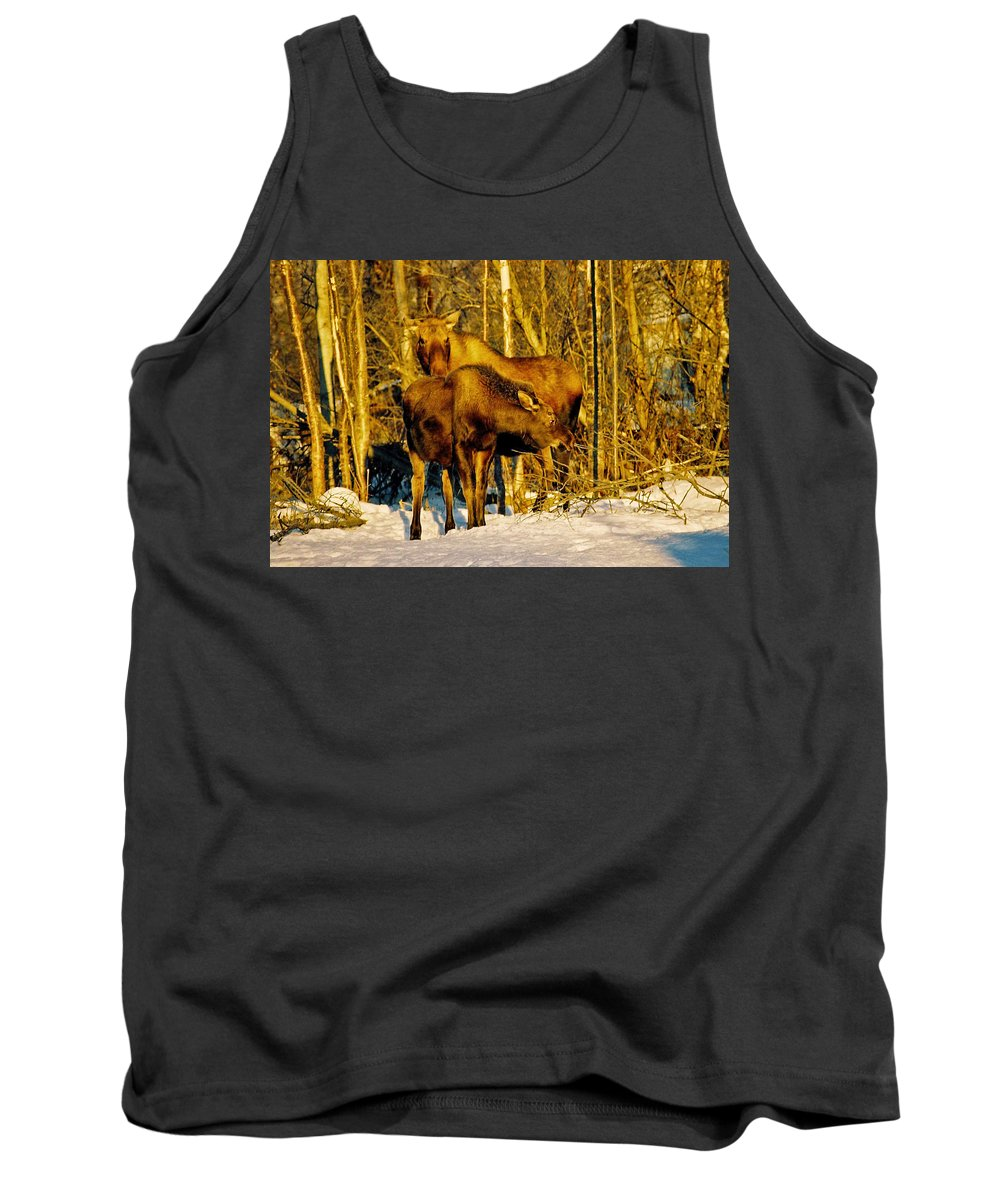 Morning Tank Top featuring the photograph Moose In The Morning by Juergen Weiss