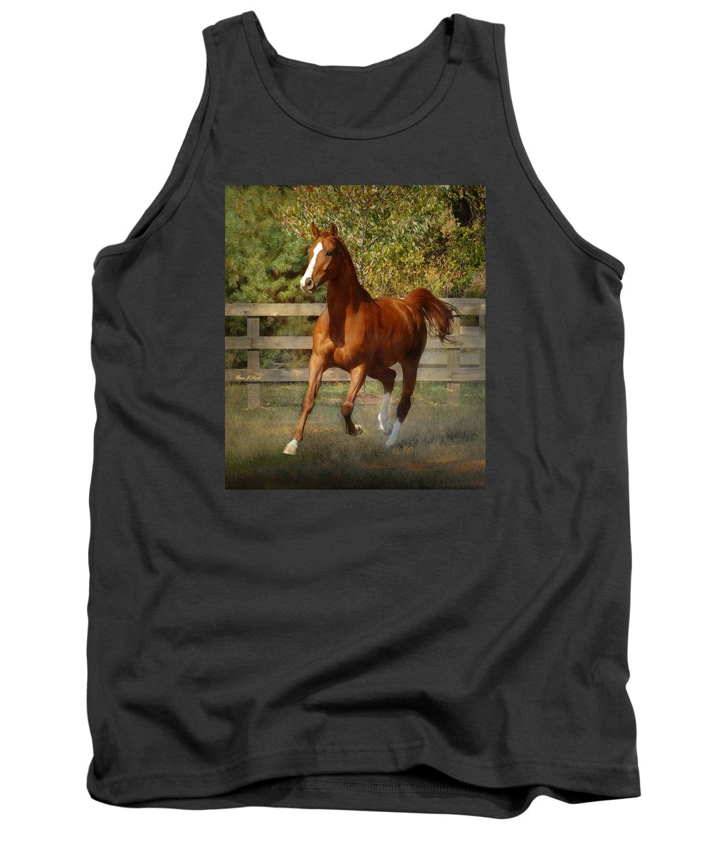 Horse Tank Top featuring the photograph Morning Has Broken by Fran J Scott