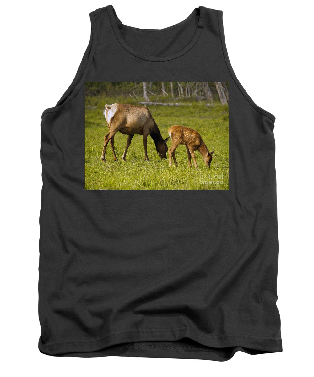 Elk Tank Top featuring the photograph Mother Elk And Fawn by Denise McAllister