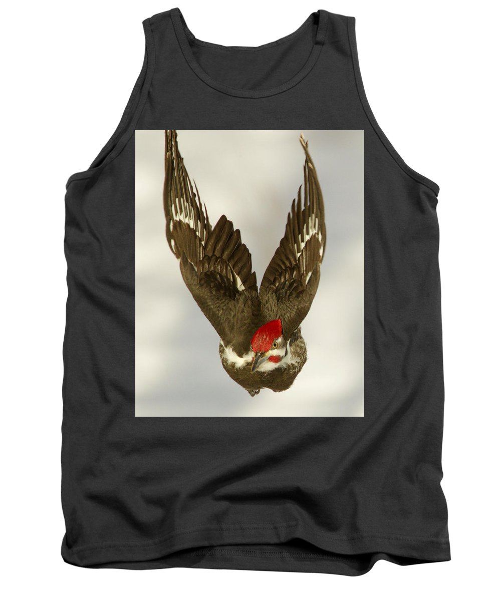 Home Farm Tank Top featuring the photograph Mr. P On The Wing by Victoria Sokolowski