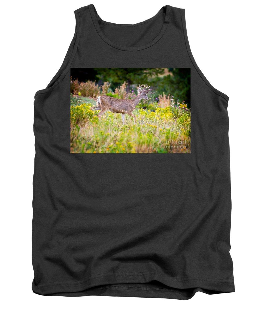 Mule Deer Tank Top featuring the photograph Mule Deer by Matt Suess