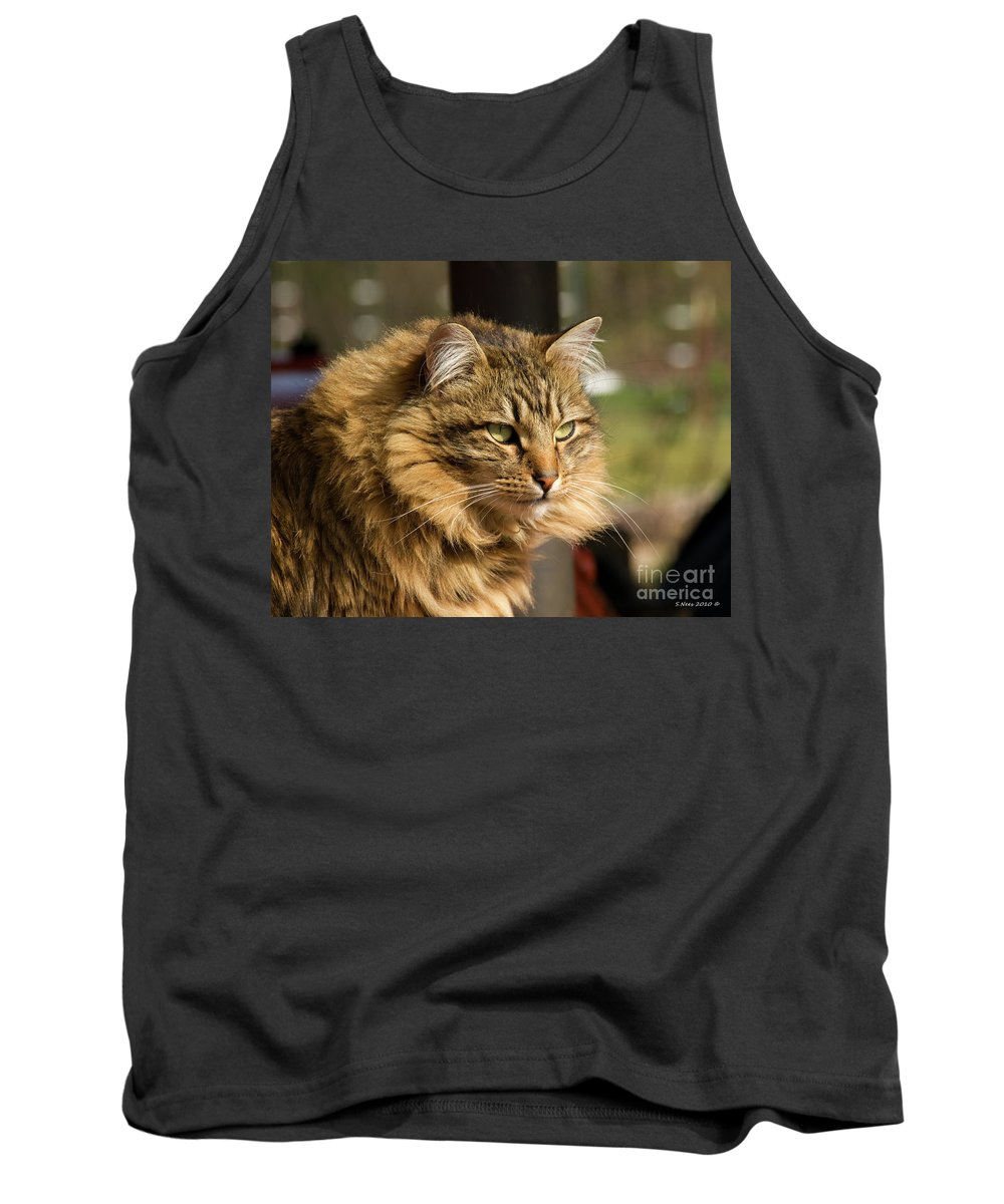Maine Coon Tank Top featuring the photograph Nari A Maine Coon Cat by Shari Nees