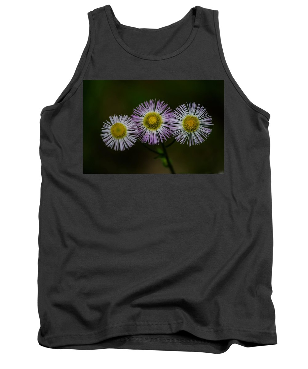 Aster Tank Top featuring the photograph Nature's Asterisks by Tim Beebe