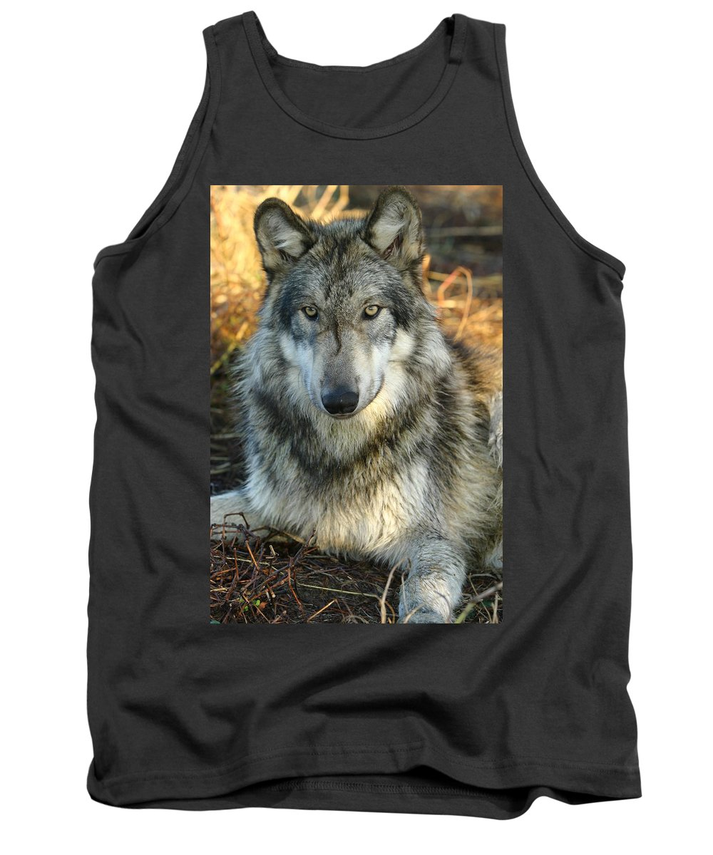 Wolf Lupine Canis Lupus Animal Wildlife Photography Photograph Tank Top featuring the photograph Noble Lupine by Shari Jardina