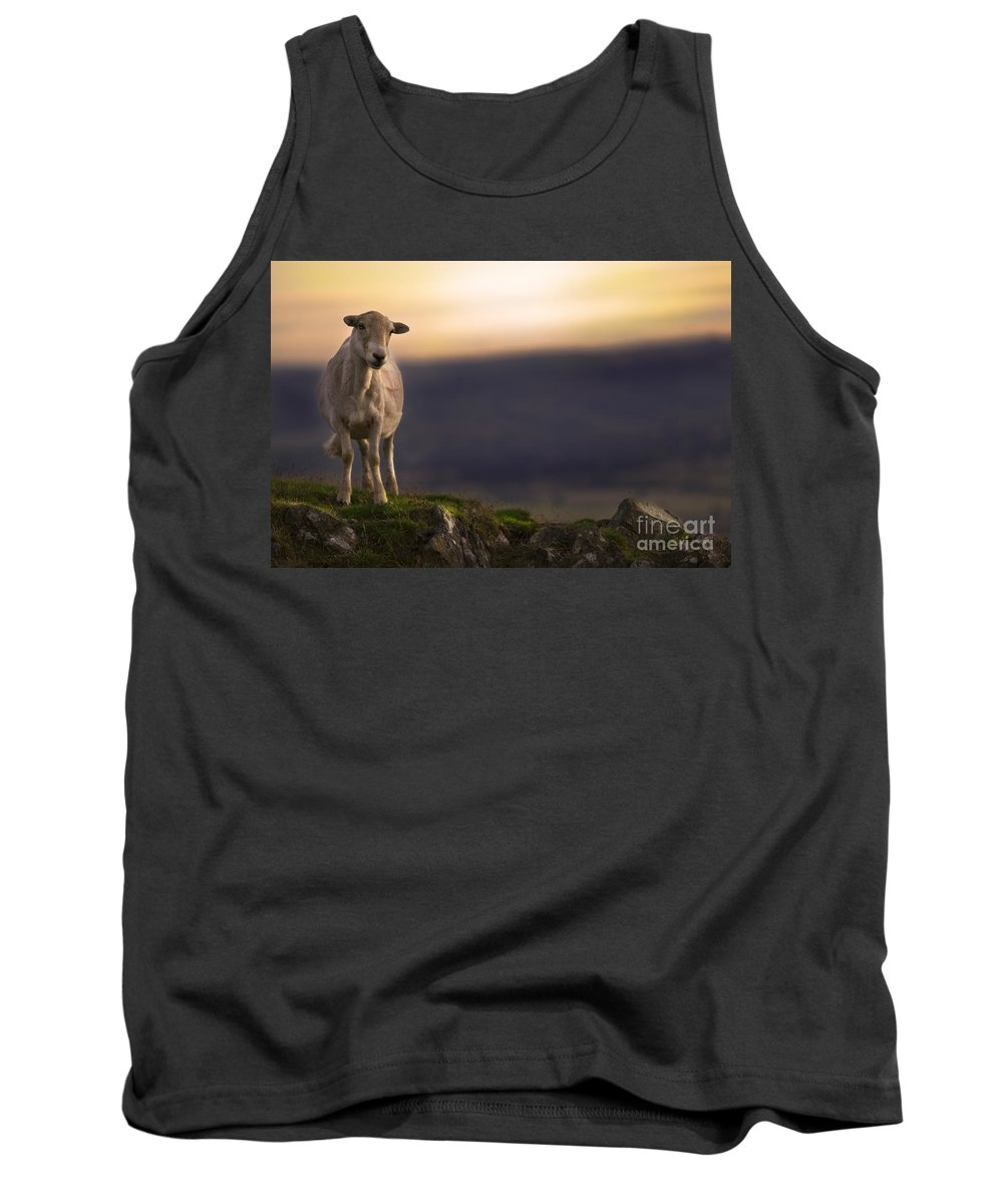Sheep Tank Top featuring the photograph On The Top Of The Hill by Angel Ciesniarska