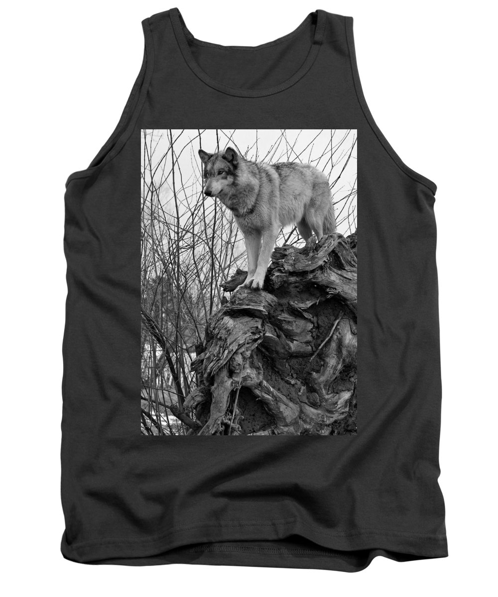 Black White Wolf Wolves Animal Wildlife Mammal Photography Photograph Canis Lupis Grey Timberwolf Tank Top featuring the photograph On Top by Shari Jardina