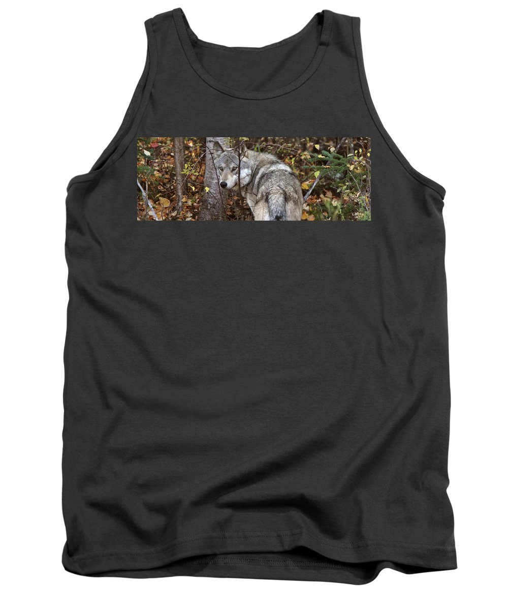 Tank Top featuring the digital art Panoramic Gray Wolf Yukon by Mark Duffy