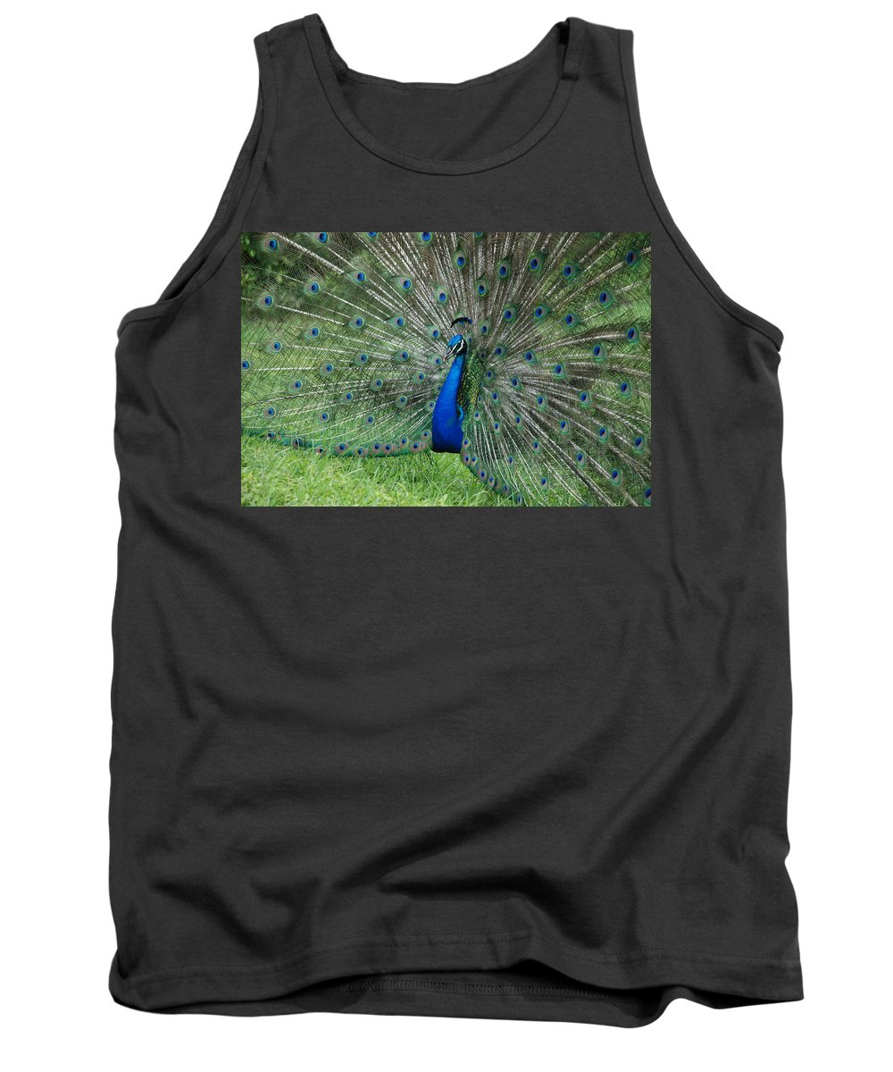 Peacock Tank Top featuring the photograph Peacocks Glory by Rob Hans