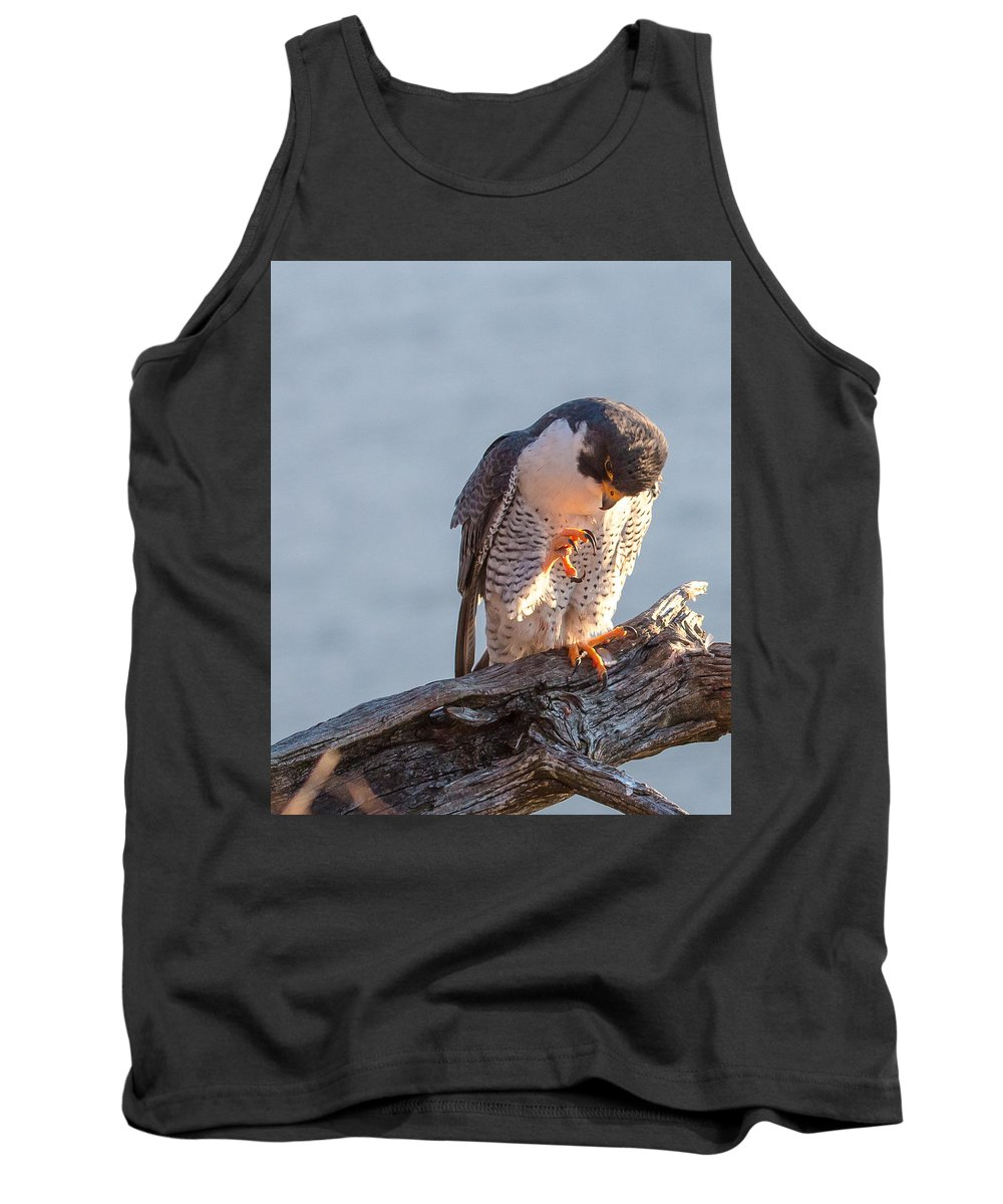 Peregrine Falcon Tank Top featuring the photograph Peregrine Claws by Joseph Peraino
