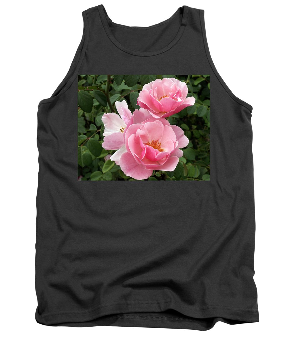 Pink Roses Tank Top featuring the photograph Pink Roses 2 by Amy Fose