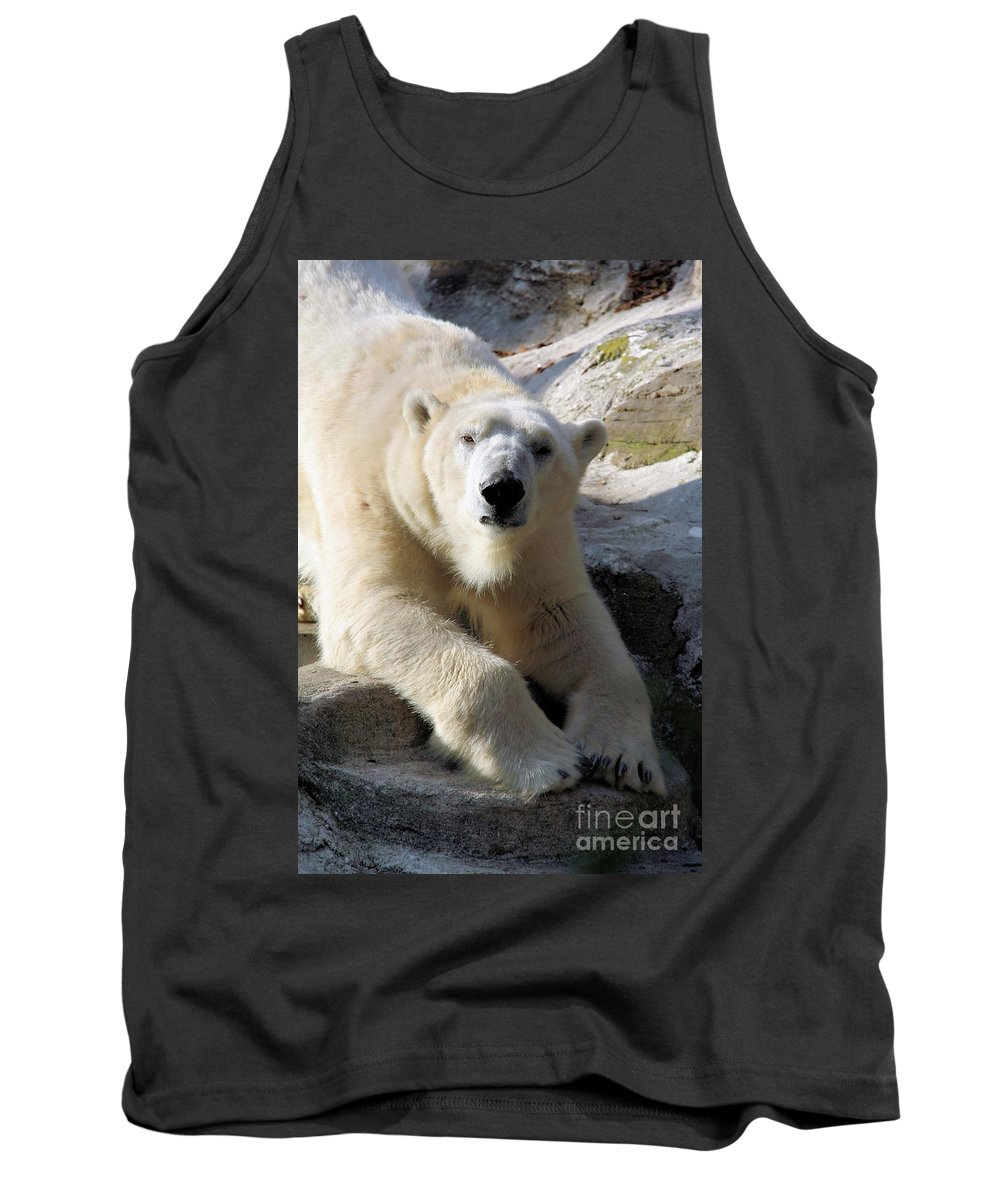 Bear Tank Top featuring the photograph Polar Bear by Karol Livote