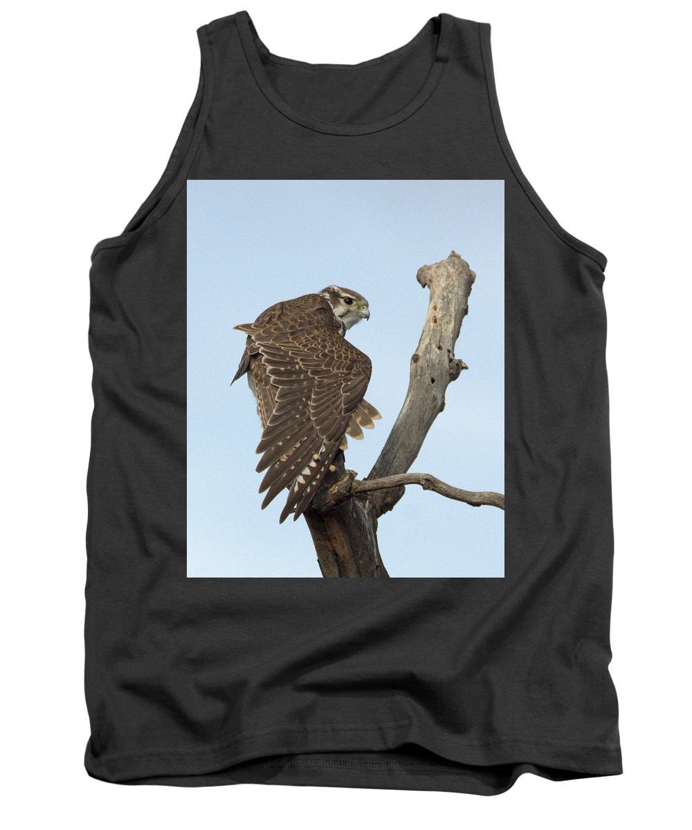 Falcon Tank Top featuring the photograph Prairie Falcon Stretching by Michael Allred