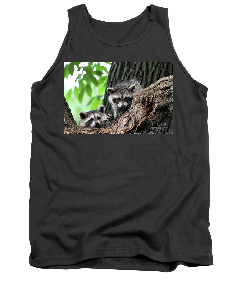 Racoons Tank Top featuring the photograph Racoons In Tree by Colin Cuthbert
