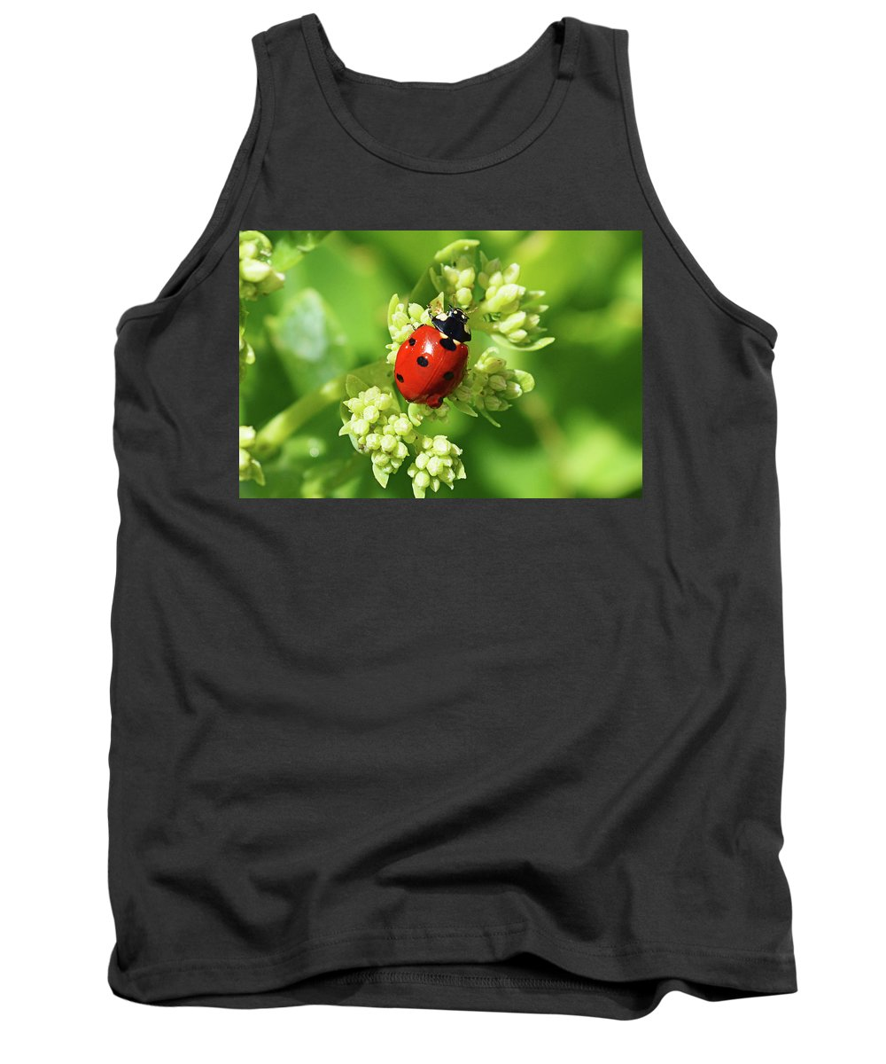 Ladybug Tank Top featuring the photograph Raindrops On Ladybug by Tracie Fernandez