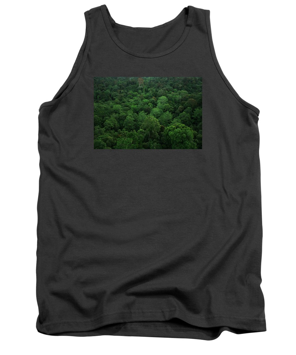 Borneo Tank Top featuring the photograph Rainforest by Andrew Parker