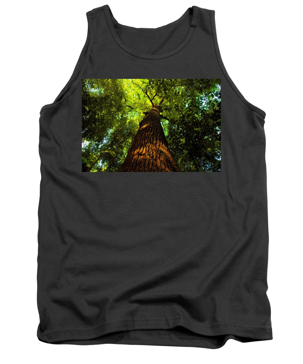 Redwood Forest Tank Top featuring the painting Redwoods by David Lee Thompson