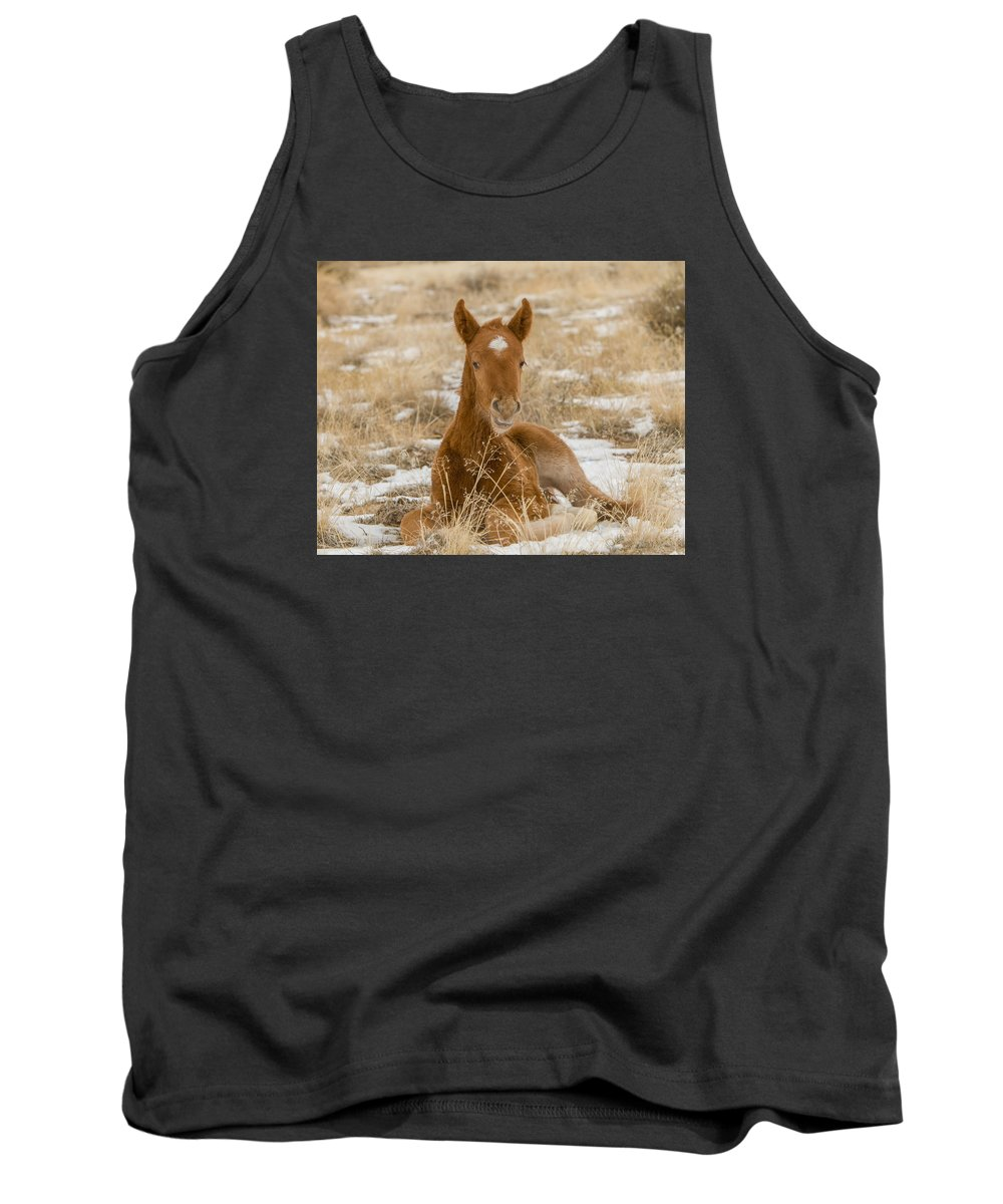Wild Horse Tank Top featuring the photograph Resting Colt by Kent Keller