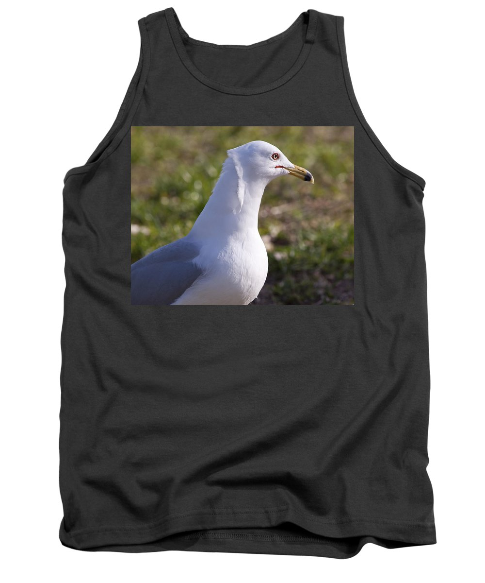 Larus Tank Top featuring the photograph Ring-billed Gull by Allan Hughes