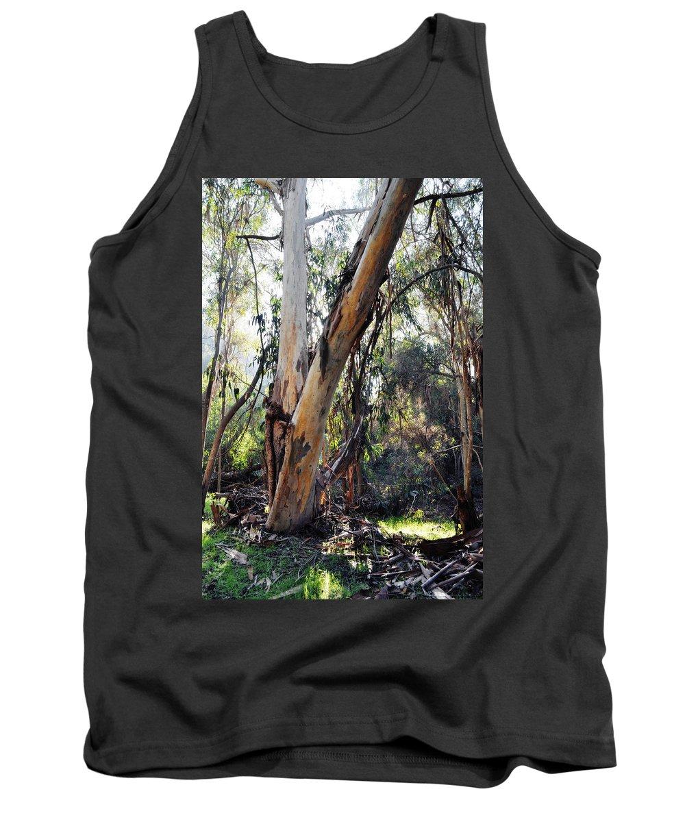Santa Barbara Tank Top featuring the photograph Santa Barbara Eucalyptus Forest by Kyle Hanson