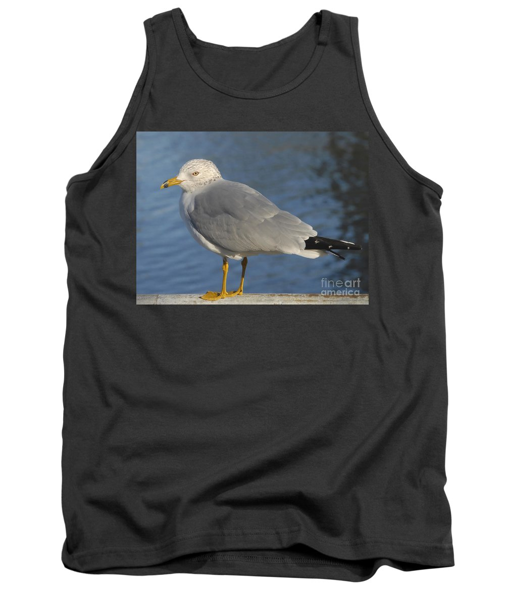 Seagull Tank Top featuring the photograph Seagull by David Lee Thompson