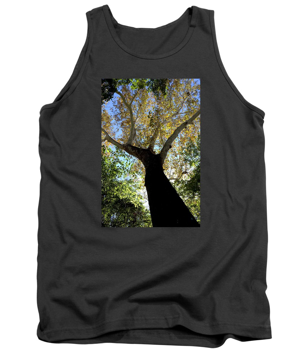 Tree Tank Top featuring the photograph Shade by Zach Hunter