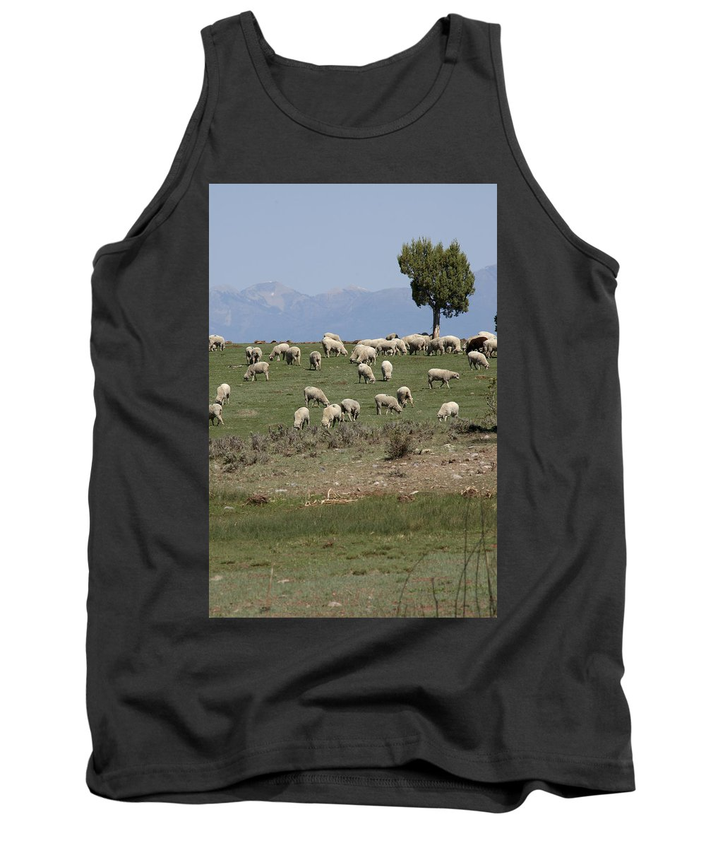 Sheep Tank Top featuring the photograph Sheep Country by Jerry McElroy