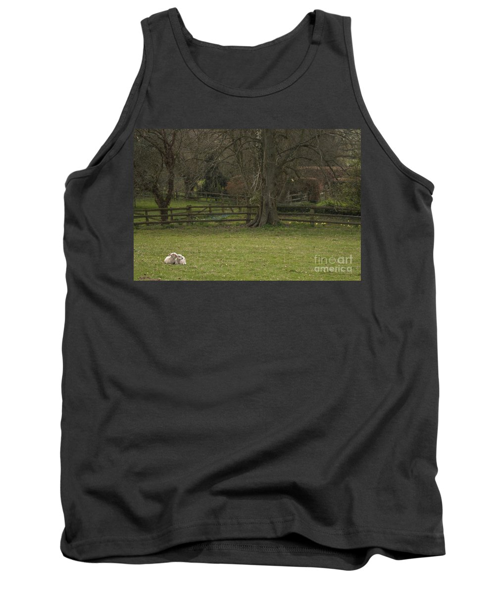 Sheep Tank Top featuring the photograph Silent Afternoon by Angel Ciesniarska
